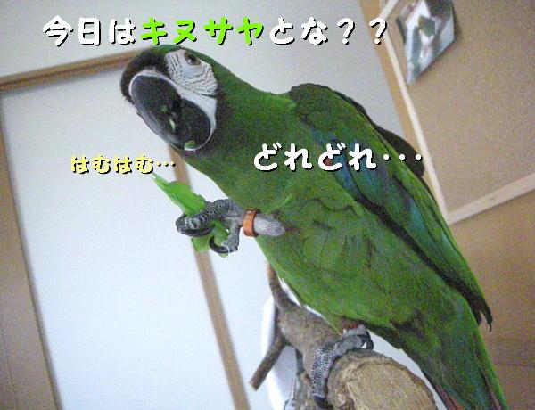 f0132055_2231353.jpg