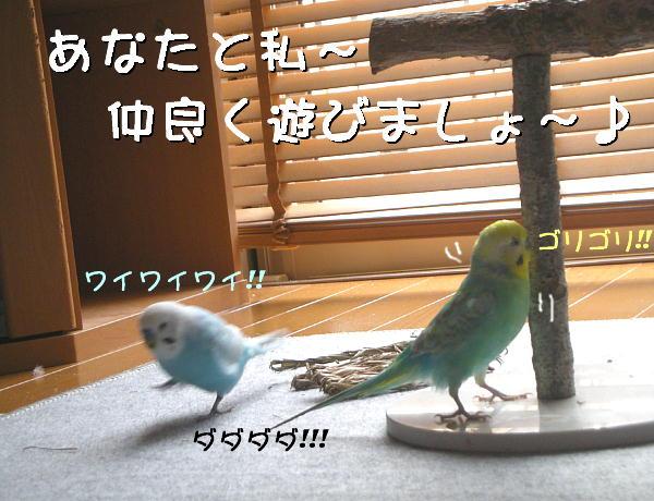 f0132055_2233364.jpg