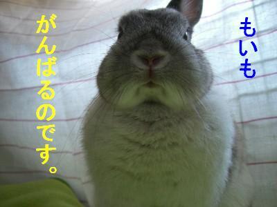 f0104057_20532668.jpg