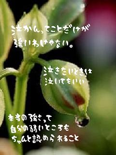 e0121704_17192158.jpg