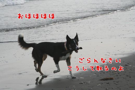 d0013149_103231.jpg
