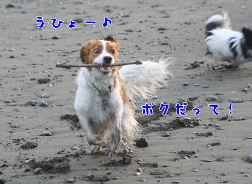 d0013149_10352571.jpg