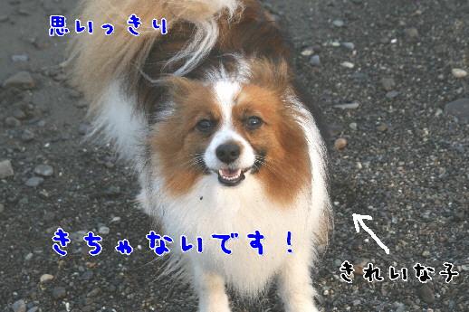 d0013149_10511130.jpg