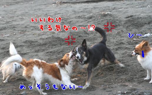 d0013149_1145759.jpg