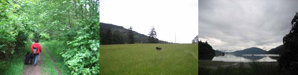 051【ソルトスプリング島、雨の日曜日、ベヴァリーとの散歩】_b0071712_17483893.jpg