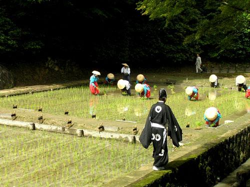 伏見稲荷 田植え祭り_e0048413_20295895.jpg