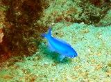 [ダイビング]ここ数日の海のマトメ_a0043520_16245698.jpg