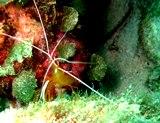 [ダイビング]ここ数日の海のマトメ_a0043520_17142061.jpg
