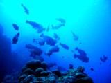 [ダイビング]ここ数日の海のマトメ_a0043520_171742.jpg