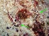 [ダイビング]ここ数日の海のマトメ_a0043520_1794596.jpg
