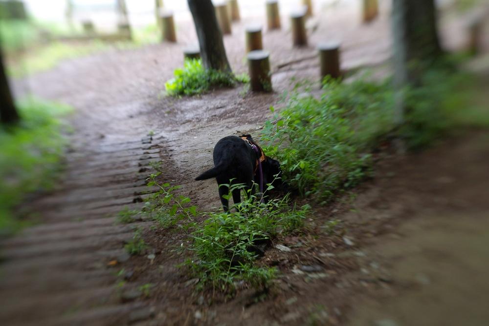 6/9 野山北公園_a0060230_2145766.jpg