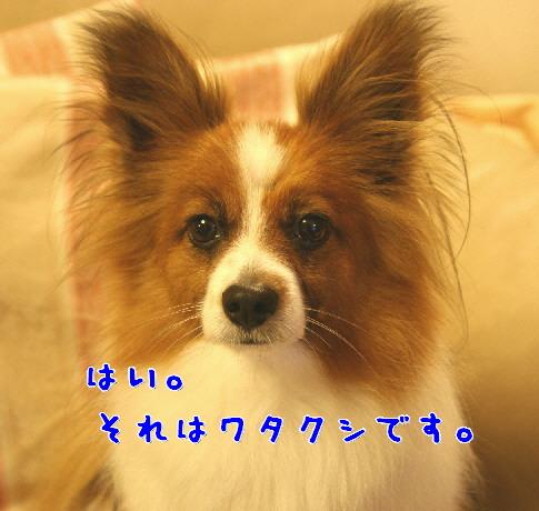 d0013149_2351653.jpg
