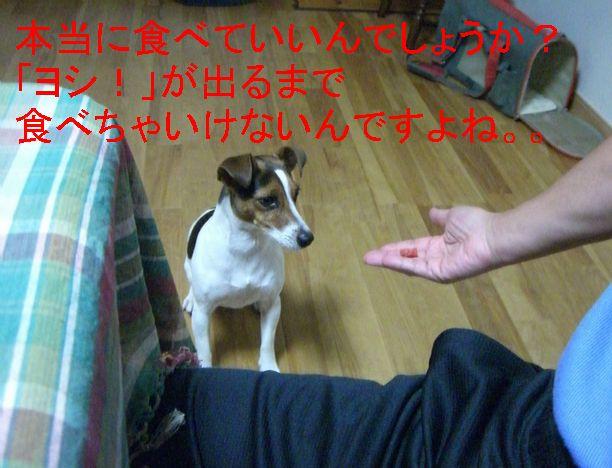 f0053952_2121184.jpg