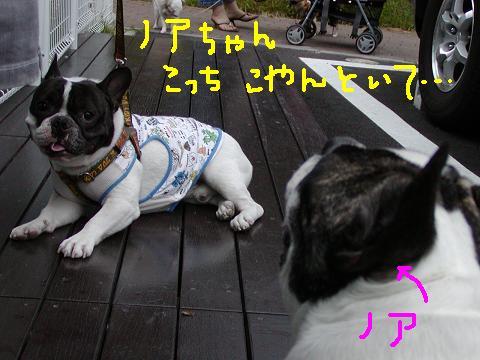 f0032507_221597.jpg