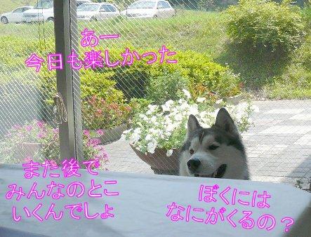 f0112407_1610580.jpg