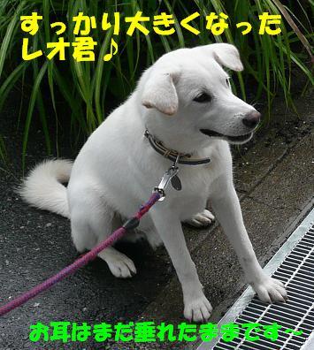 f0121712_1717104.jpg
