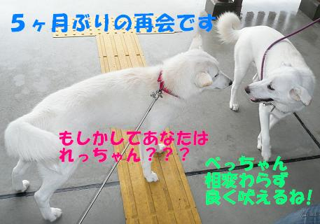 f0121712_17171858.jpg