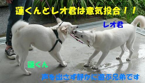f0121712_1717341.jpg