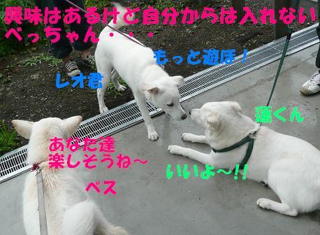 f0121712_17174387.jpg