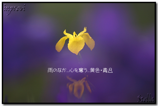 d0015026_1036716.jpg