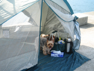 簡易テントの中に納まっているラッキー。ちょっとした休憩や着替えなどに便利なミニテントです。