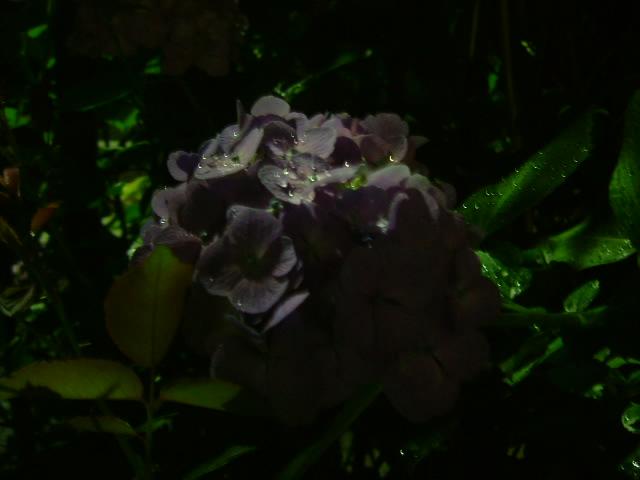 オークリーフ(土曜日の夜)_f0049672_1313997.jpg