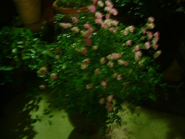オークリーフ(土曜日の夜)_f0049672_13285730.jpg