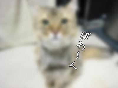 a0045990_1371787.jpg