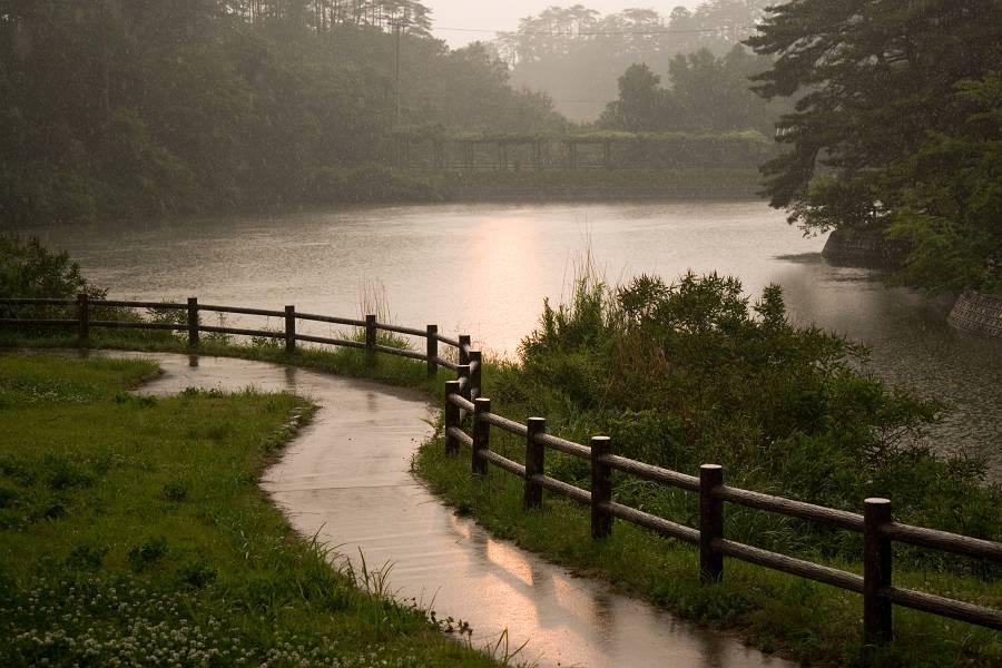 雨の遊歩道_b0074098_624687.jpg