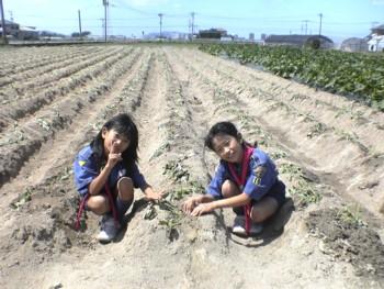 秋が楽しみ♪~芋の苗植え体験~_d0082356_12151075.jpg