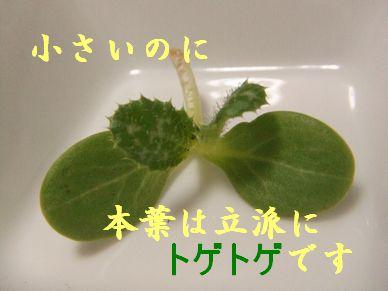 b0082757_7294217.jpg