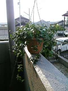 我が家の(植物)草・・・草・・・木。_a0077804_14321730.jpg