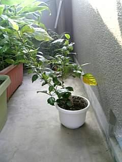我が家の(植物)草・・・草・・・木。_a0077804_14334753.jpg