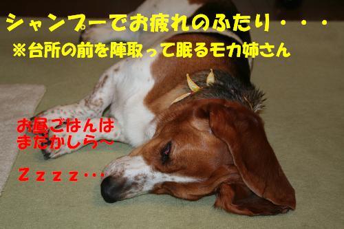 f0121712_17302493.jpg