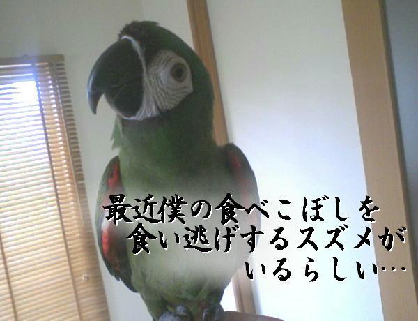 f0132055_127309.jpg