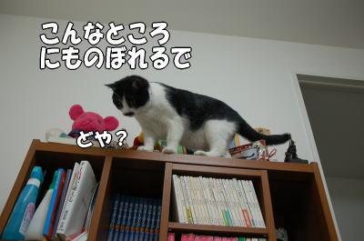 b0041182_2230040.jpg