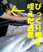 c0092097_15235395.jpg