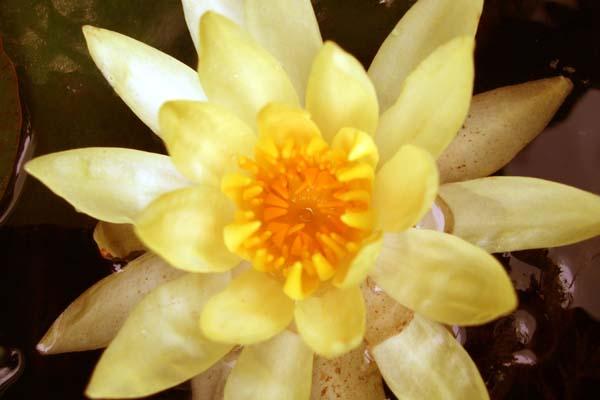 黄色_c0093301_1129402.jpg