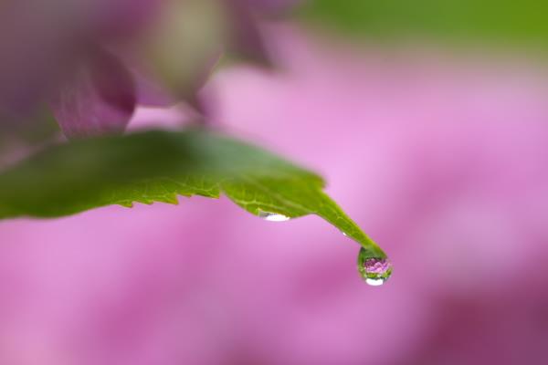 紫陽花園(太閤山ランド)_e0126642_14281094.jpg