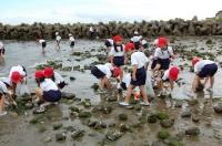 箱作小学校2年学習サポート in  自然海岸_c0108460_2361990.jpg