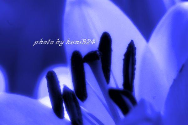 f0131365_14193917.jpg