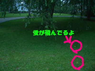e0122968_5213786.jpg