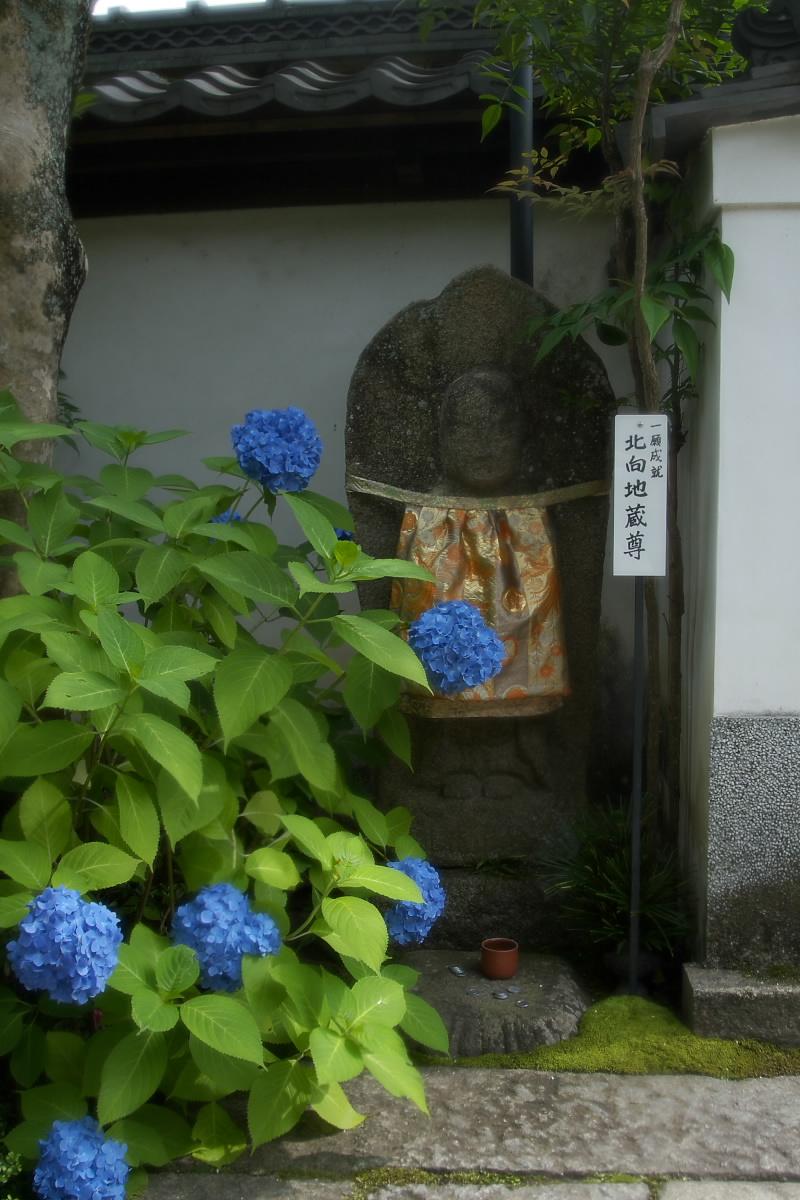 奈良 矢田寺 <紫陽花> 1_f0021869_2081750.jpg