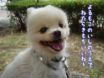c0087521_0593063.jpg