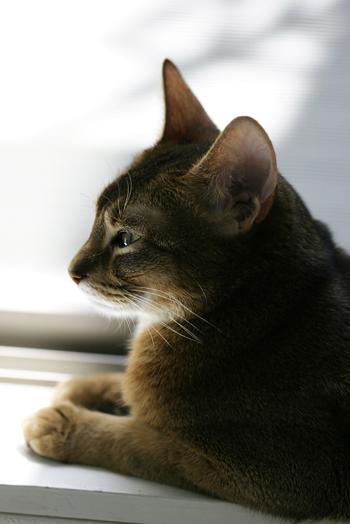 [猫的]外の匂い_e0090124_8182028.jpg