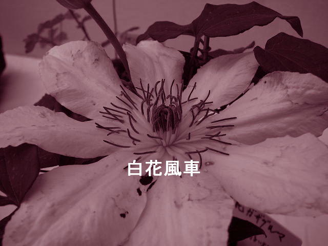 f0099535_18193853.jpg