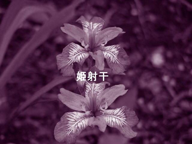 f0099535_1954474.jpg