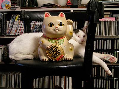 新しい招き猫_a0028451_17592492.jpg