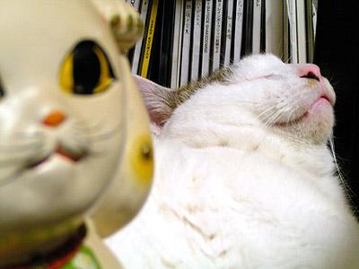 新しい招き猫_a0028451_18102234.jpg