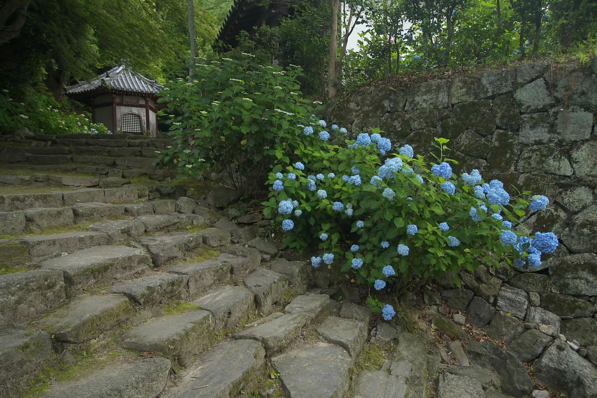 奈良 矢田寺 <紫陽花> 9_f0021869_931393.jpg